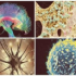 Australian Government Advances Stroke Research Targeting Neuroinflammation
